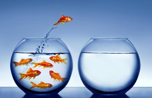 Genetically-Engineered-Goldfish